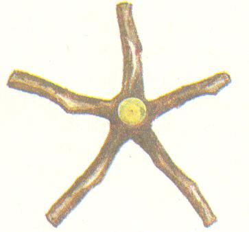 Скелетные ветви яруса в проекции кроны