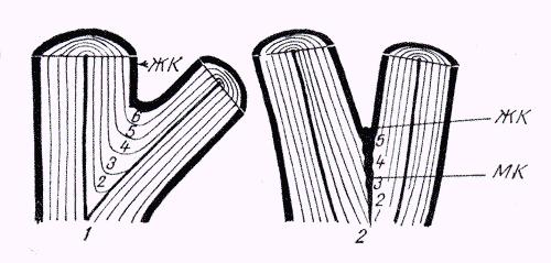Угол отхождения ветви и степень ее срастания со стволом