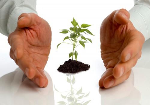 Бережные руки и растение